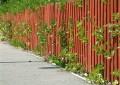 czyszczenie ogrodzeń